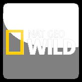 Смотреть онлайн канал Nat Geo Wild бесплатно в хорошем качестве